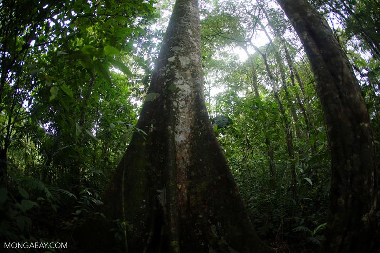 Rainforests [costa_rica_la_selva_1771]