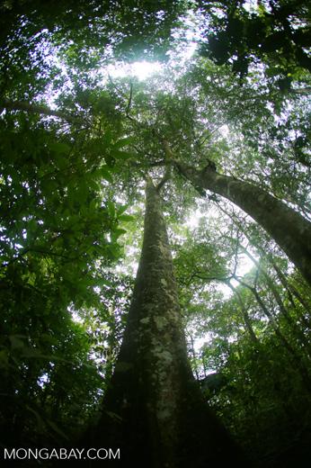 Rainforests [costa_rica_la_selva_1775]