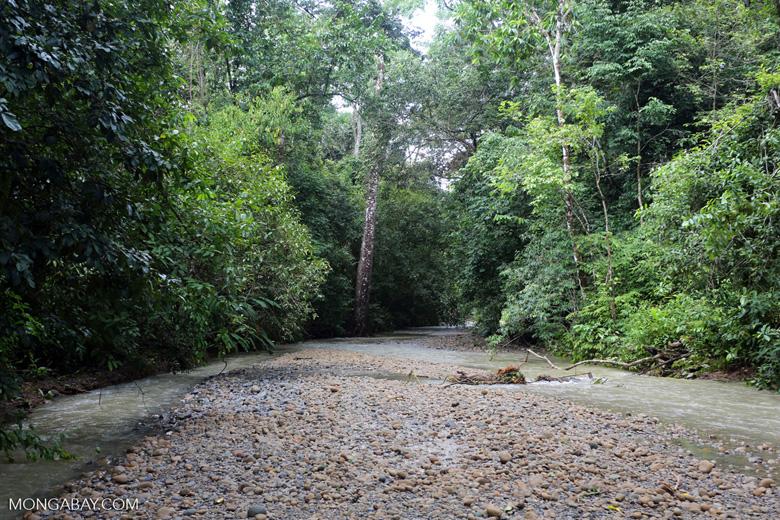 Rainforest creek [costa_rica_osa_0009]