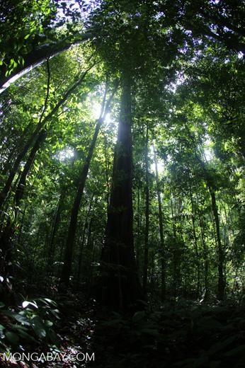 Rainforest [costa_rica_osa_0019]