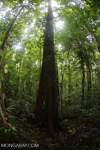 Rainforests [costa_rica_osa_0151]