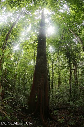 Rainforests [costa_rica_osa_0152]