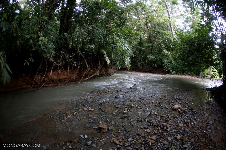Rainforest creek on the Osa Peninsula [costa_rica_osa_0395]