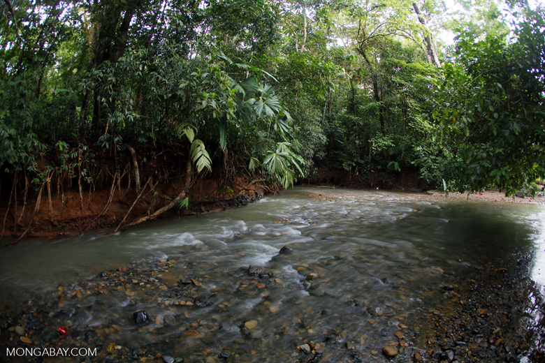 Rainforest creek on the Osa Peninsula
