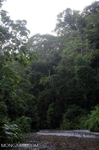 Rainforest creek on the Osa Peninsula [costa_rica_osa_0408]