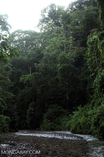Rainforest creek on the Osa Peninsula [costa_rica_osa_0409]