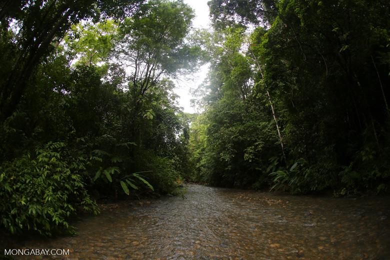 Rainforest creek on the Osa Peninsula [costa_rica_osa_0422]