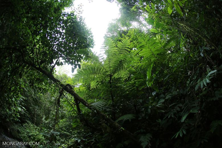Rainforest creek on the Osa Peninsula [costa_rica_osa_0789]