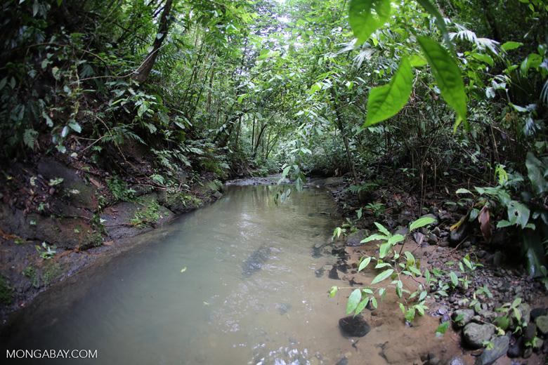 Rainforest creek on the Osa Peninsula [costa_rica_osa_0791]