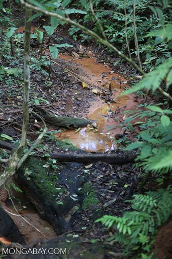 Jungle creeks