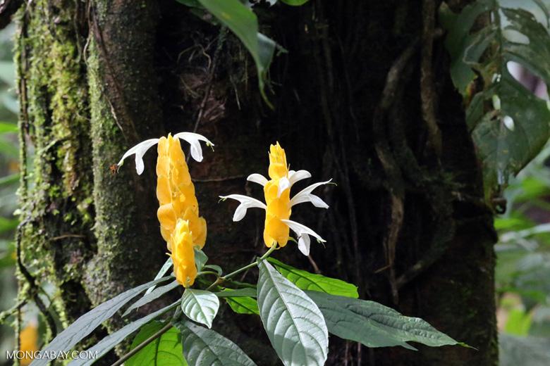 Flowers [costa_rica_siquirres_0036]