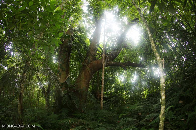 Siquirres rainforest [costa_rica_siquirres_0109]