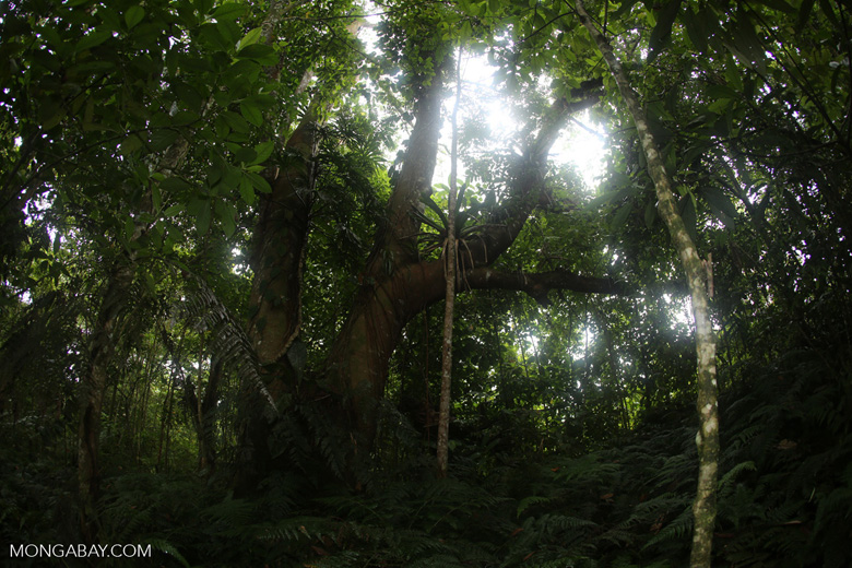 Siquirres rainforest [costa_rica_siquirres_0110]