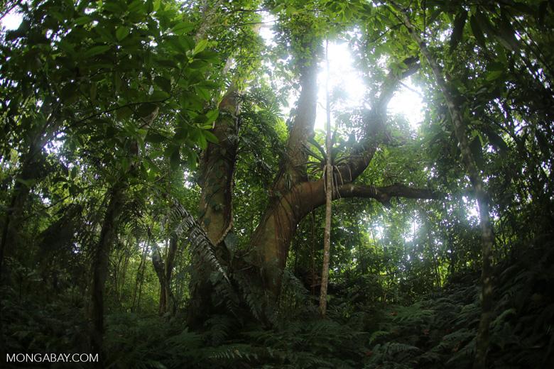 Siquirres rainforest [costa_rica_siquirres_0113]