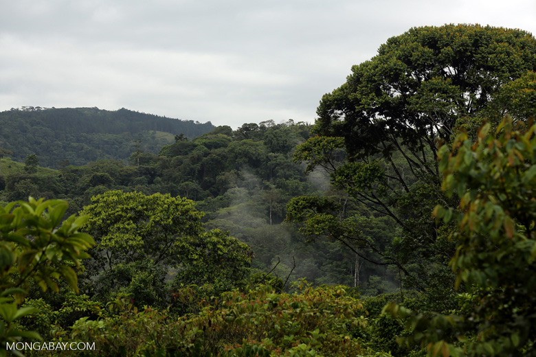 Siquirres rainforest [costa_rica_siquirres_0114]