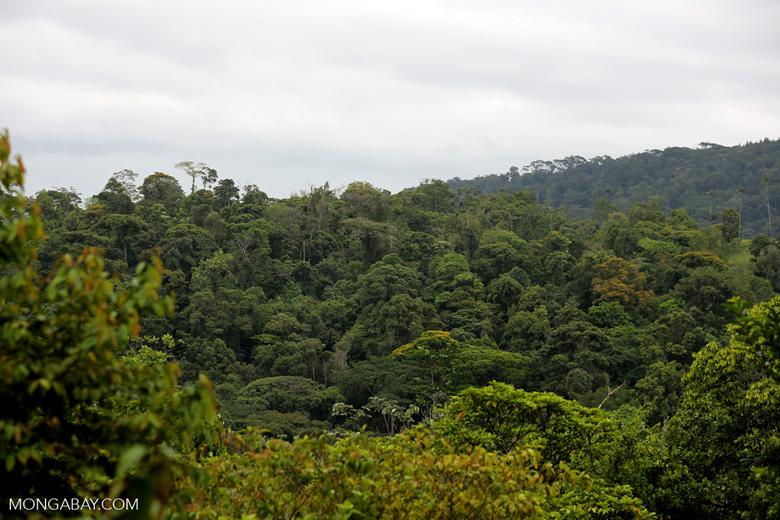 Siquirres rainforest [costa_rica_siquirres_0117]