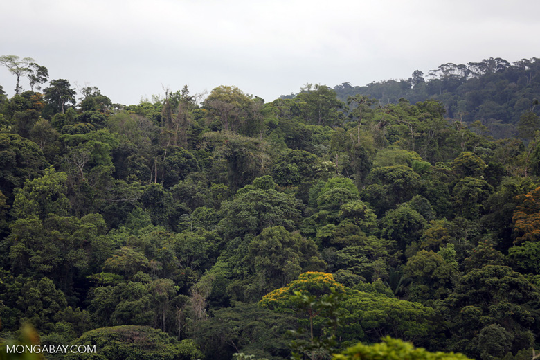 Siquirres rainforest [costa_rica_siquirres_0121]