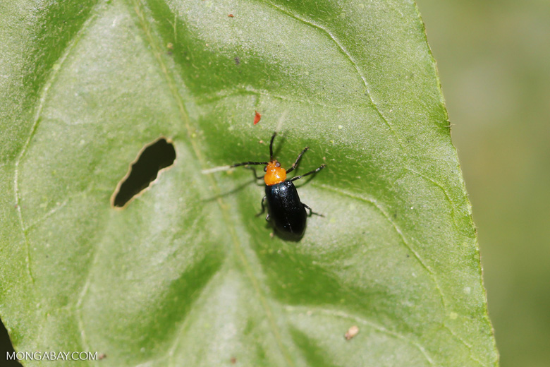 Bug [costa_rica_siquirres_0557]