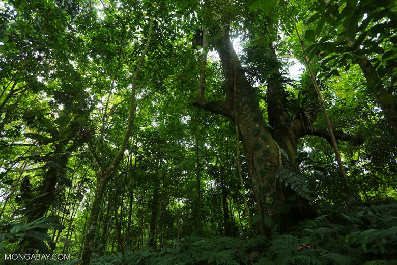 Costa Rica rainforest [costa_rica_siquirres_0661]