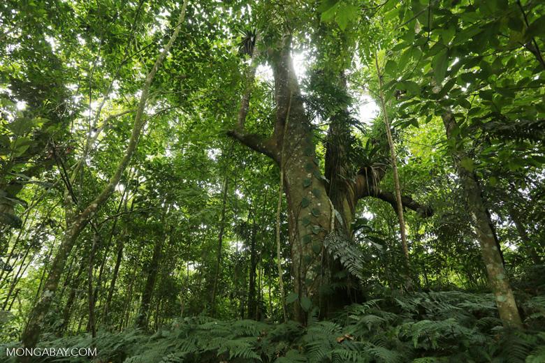 Costa Rica rainforest [costa_rica_siquirres_0662]