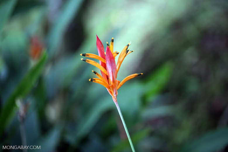 Plant [costa_rica_siquirres_0686]