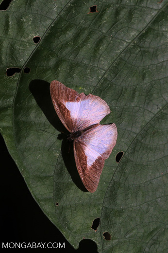 Butterfly [costa_rica_siquirres_0867]