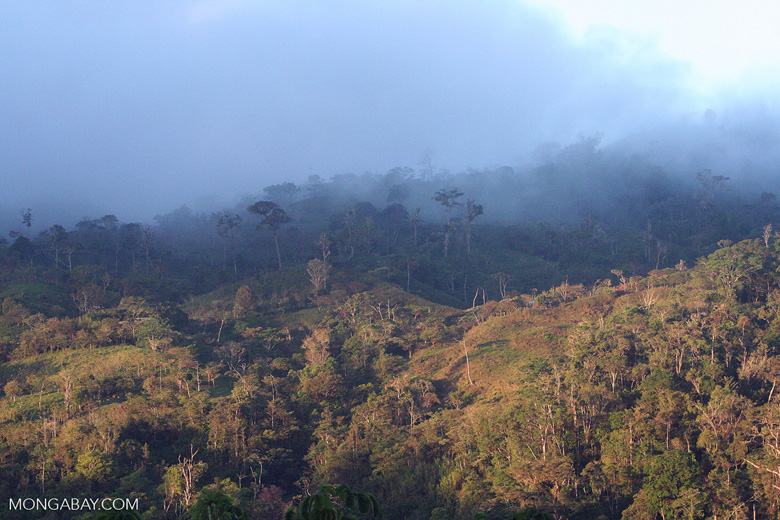 Pasture, regenerating forest, and forest in Las Cruces