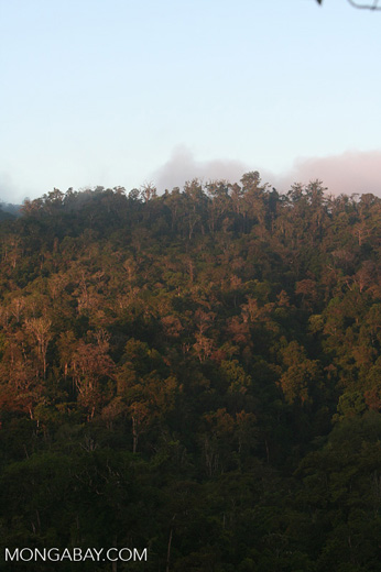 Tropical forest in Las Cruces