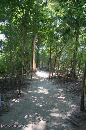 Sandy trail at Manuel Antonio National Park