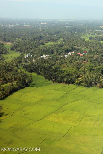 Rice fields near Banda Aceh [aceh_0008]