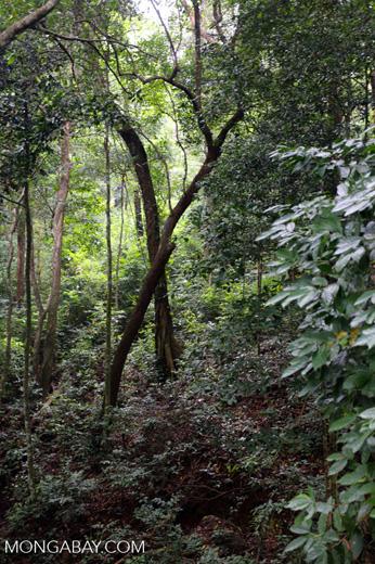 Rainforest near Jantho [aceh_0100]