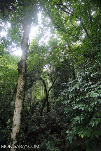Rainforest near Jantho [aceh_0106]