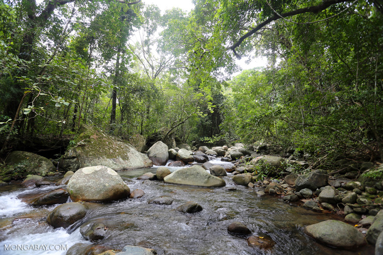 Rainforest creek near Jantho [aceh_0226]