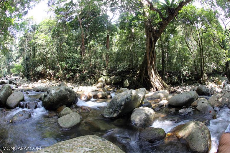 Rainforest river [aceh_0283]