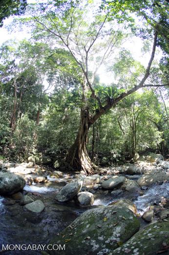 Rainforest river [aceh_0294]