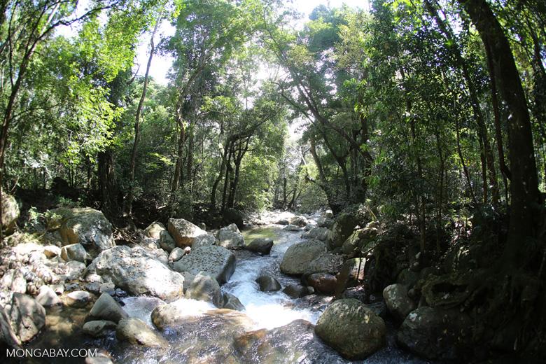Rainforest river [aceh_0304]