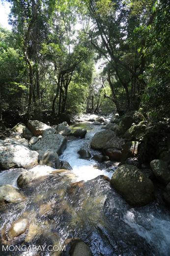 Rainforest river [aceh_0306]