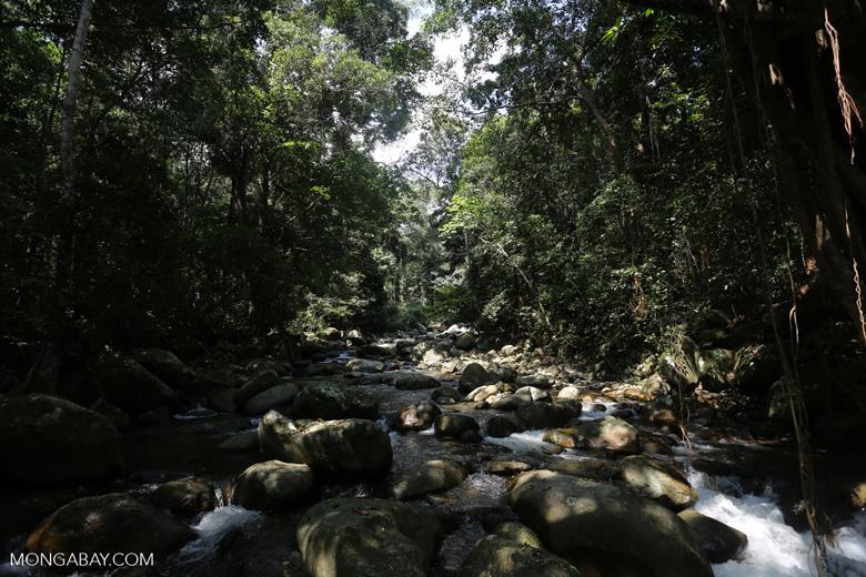 Rainforest river [aceh_0312]