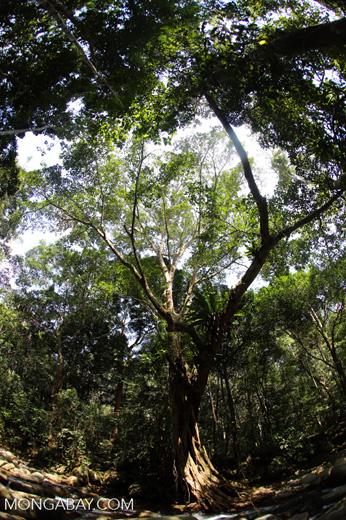 Rainforest river [aceh_0331]