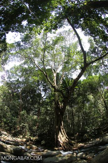 Rainforest river [aceh_0332]