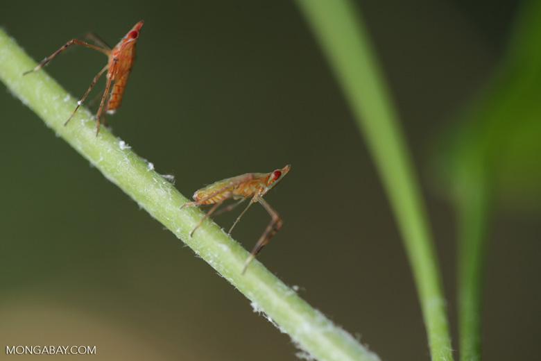 Bug [aceh_0344]