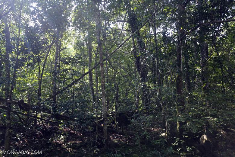 Aceh rainforest [aceh_0443]