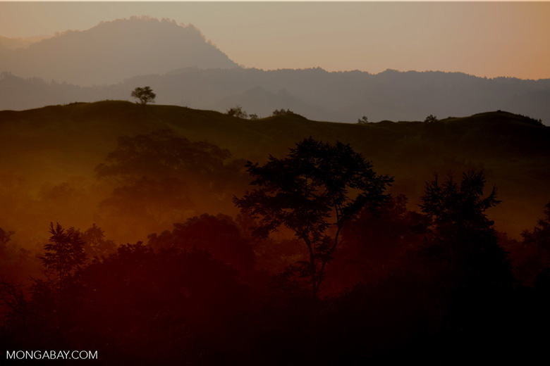Daybreak over the Aceh forest