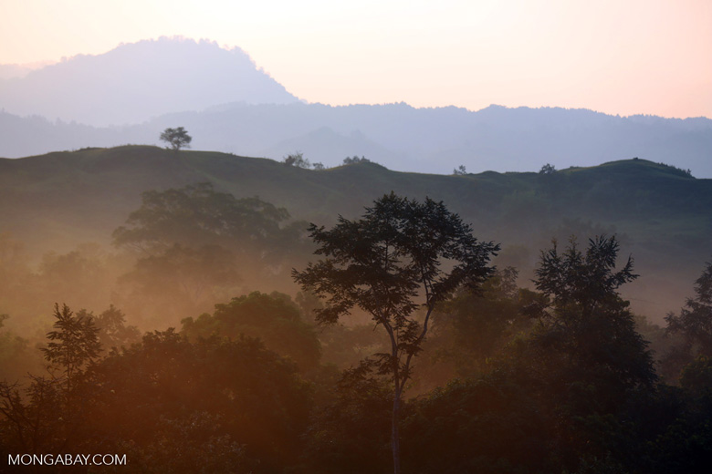 Dawn over the Aceh forest