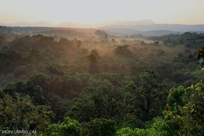 Sunrise over the Aceh forest