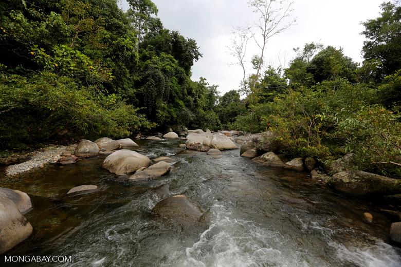 Rainforest river near Jantho