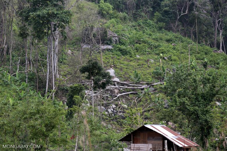Smallholder deforestation in Aceh [aceh_0607]