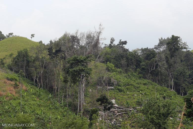 Smallholder deforestation in Aceh