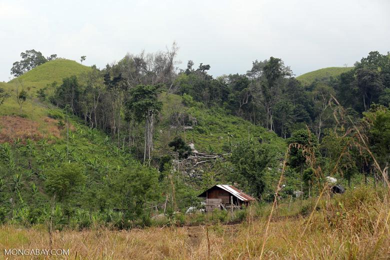 Smallholder deforestation in Aceh [aceh_0610]