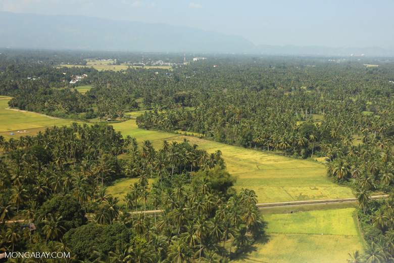 Rice fields near Banda Aceh [aceh_0613]